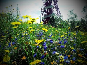 Flowers and the Orbit